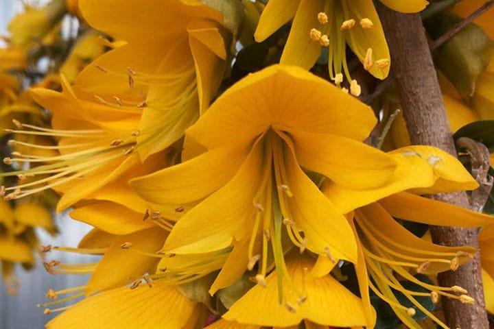 fiori-vivaio-la-primula