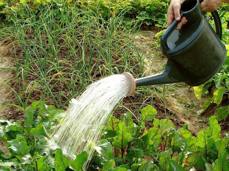 innaffiare l'orto